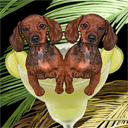 dachshunds, dog art and margarita dogs, dachshunds dog pop art prints, dog paintings, dog portraits and margarita pet prints in colorful original dachshunds dog art and fine art dog prints by artist Jane Billman and Gregg Billman