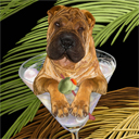 chinese shar pei dog art and martini dogs, chinese shar pei dog pop art prints, dog paintings, dog portraits and martini pet portraits in colorful original chinese shar pei dog art and fine art dog prints by artists Jane Billman and Gregg Billman